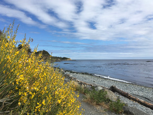 Along the Seaside Path in Spring