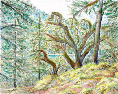 'The Old Soldier's Wood' (Mount Maxwell, Salt Spring Island)