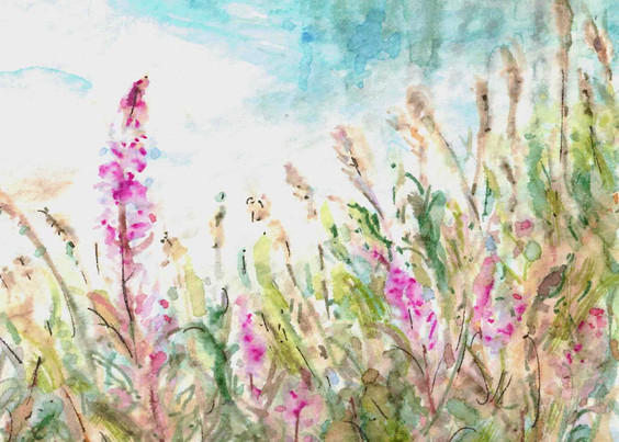 Fireweed by the Lake: Item # - A30