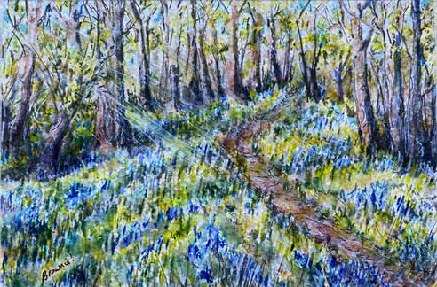 Forest Bluebells