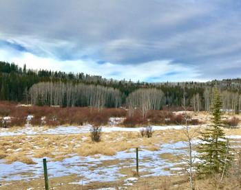 Across the Field in Early Winter