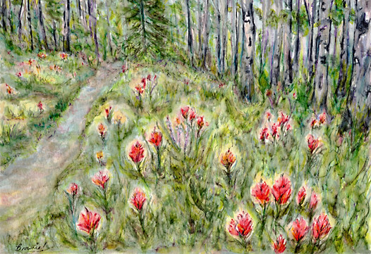 Indian Paintbrush in the Forest