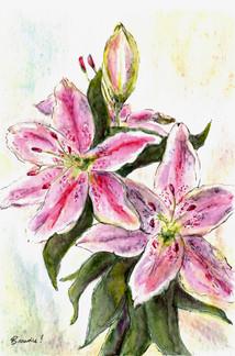 Jane's Lily