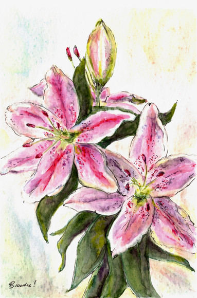 Jane's Lily: Item # - A17