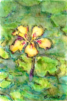 #1 of A Tiny Trio - Waterlilies and Lotus