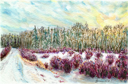 Winter Light on Woods and Willow: Item # - A21