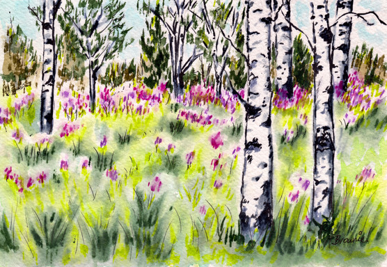Fireweed and Aspen: Item # - A39