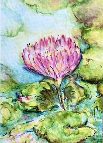 Tiny Waterlily: Item # - A27