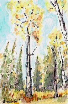 Autumn Aspen 2: Item # - A25