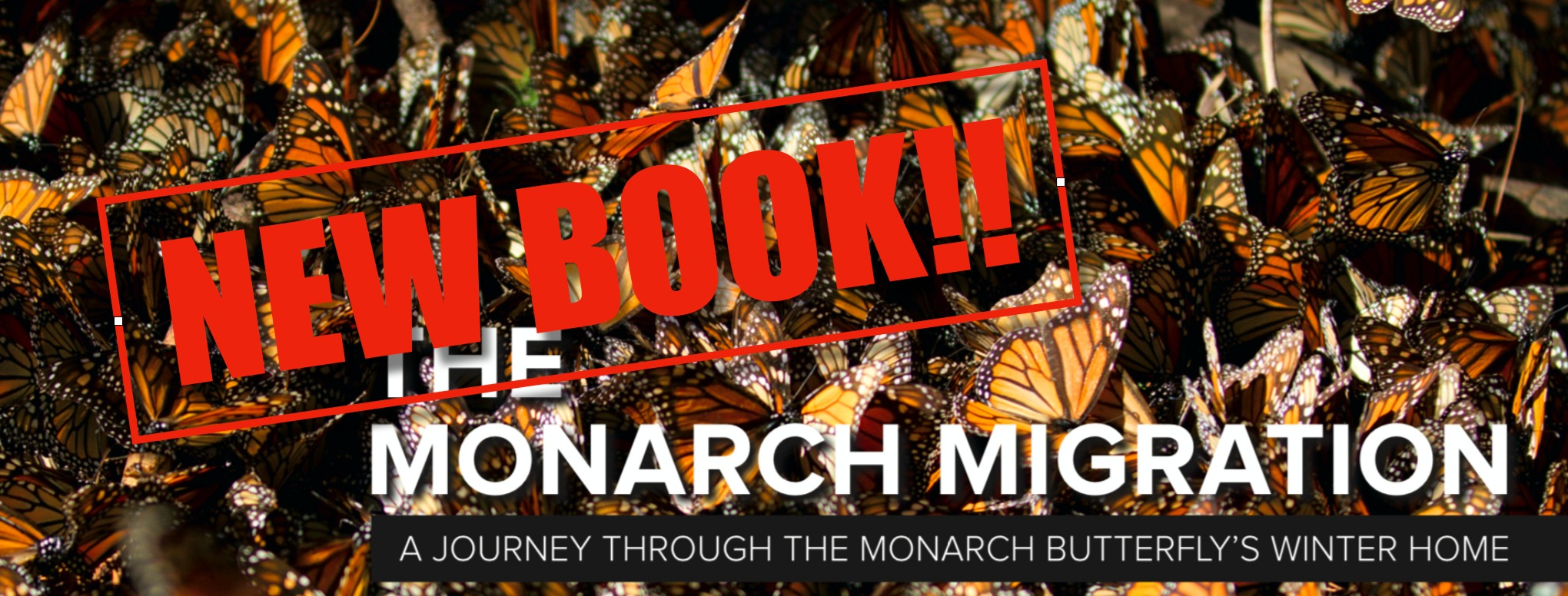 Monarch Book on Amazon