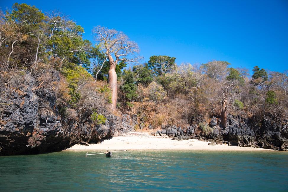 baobab trees on the coast of anjajavy