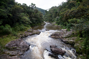 a river rushes through the cloud forests of Ranmafana National Park