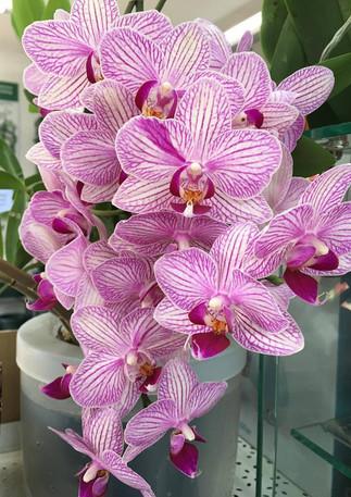 orchidinsmartpot.jpg