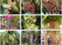 orchids1.jpeg
