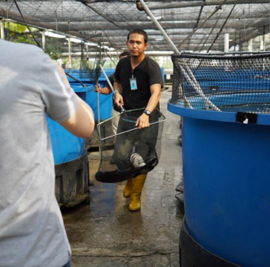 Rooftop Fish Farm - Autopot® Aquaponics