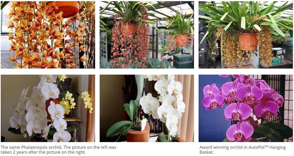 orchid3.jpeg