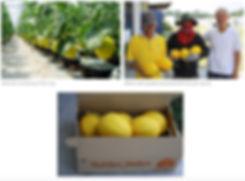 melon4.jpeg