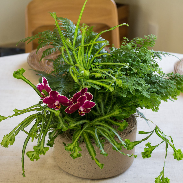 Vaso de cerâmica P plantado