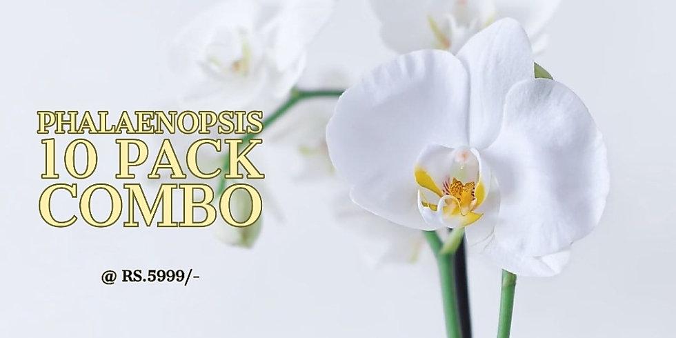 Phalaenopsis Sale.jpg