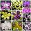 Thumbnail: Dendrobium Seedlings Combo