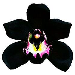 buy catasetum orchid plants online
