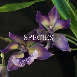 2Species.jpg