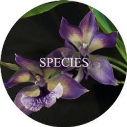 buy orchid plants online