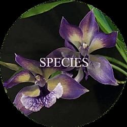 Species Orchids