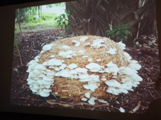 Mushroom Sculpture - Art and farming workshop @BigCi Bilpin