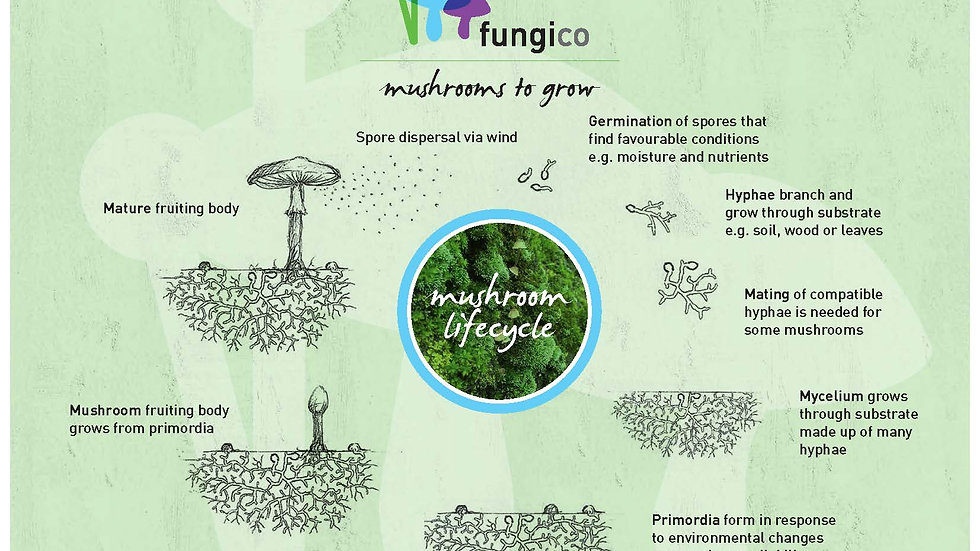 Mushroom Lifecycle Poster A4