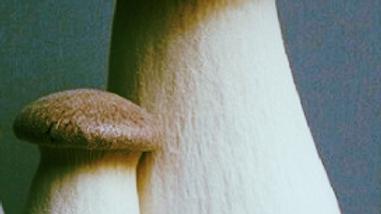 King Brown Oyster Mushroom Grow Kit