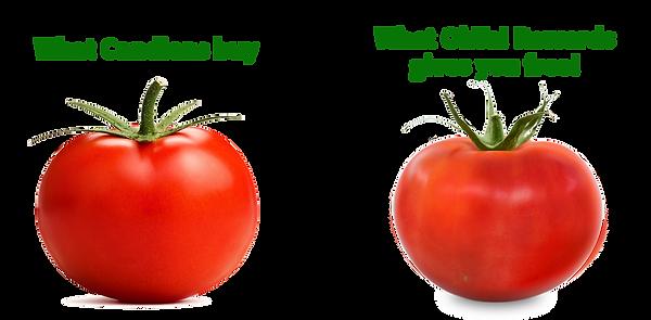 Tomato Comparison.png