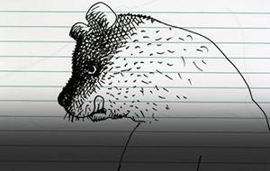 Glaser's Reclaimed Doodles