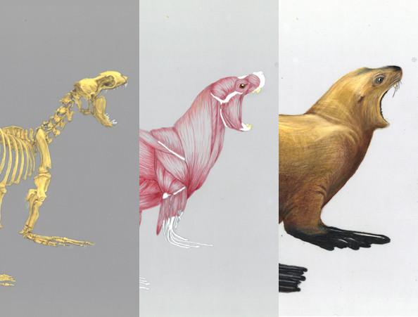 Sea lion by Jess Stitt