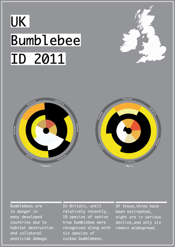 UK Bumblebee ID by Robert Goulding on Behance: https://www.behance.net/gallery/1117289/UK-Bumblebee-ID