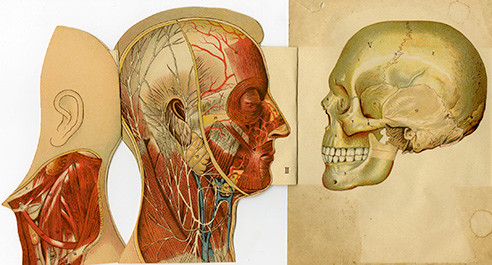 head and skull anatomy