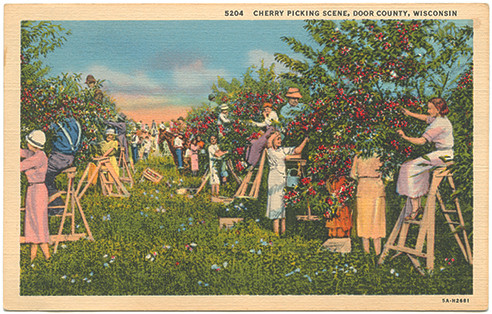 (pg 212) _Cherry picking scene, Door County, Wisconsin_ Teich 5A-H2681, 1935