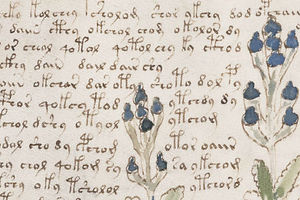 The Voynich Manuscript: A Centuries-Old Print Riddle