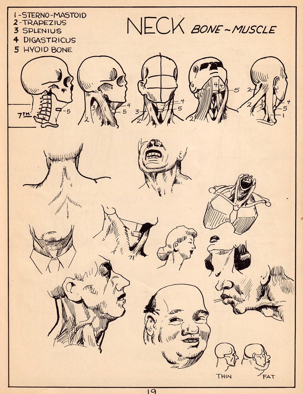 A simplified art anatomy