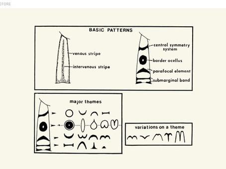 Scientist as Visual Communicator