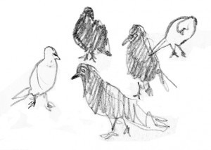 drawing of birds