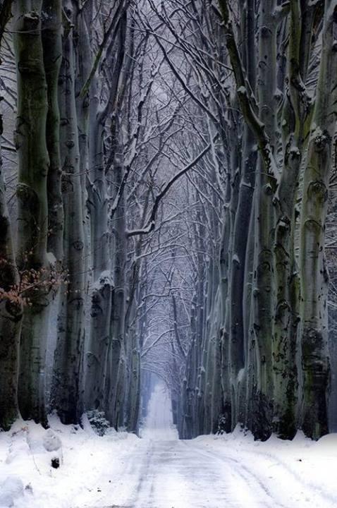 http://tassels.tumblr.com/post/73161684679/winter-forest-czech-republic
