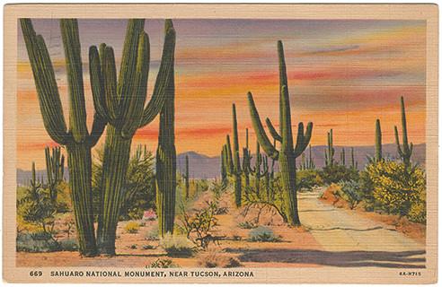 (pg 2) _Sahuaro National Monument, near Tucson, Arizona,_ Teich 6A-H715, 1936