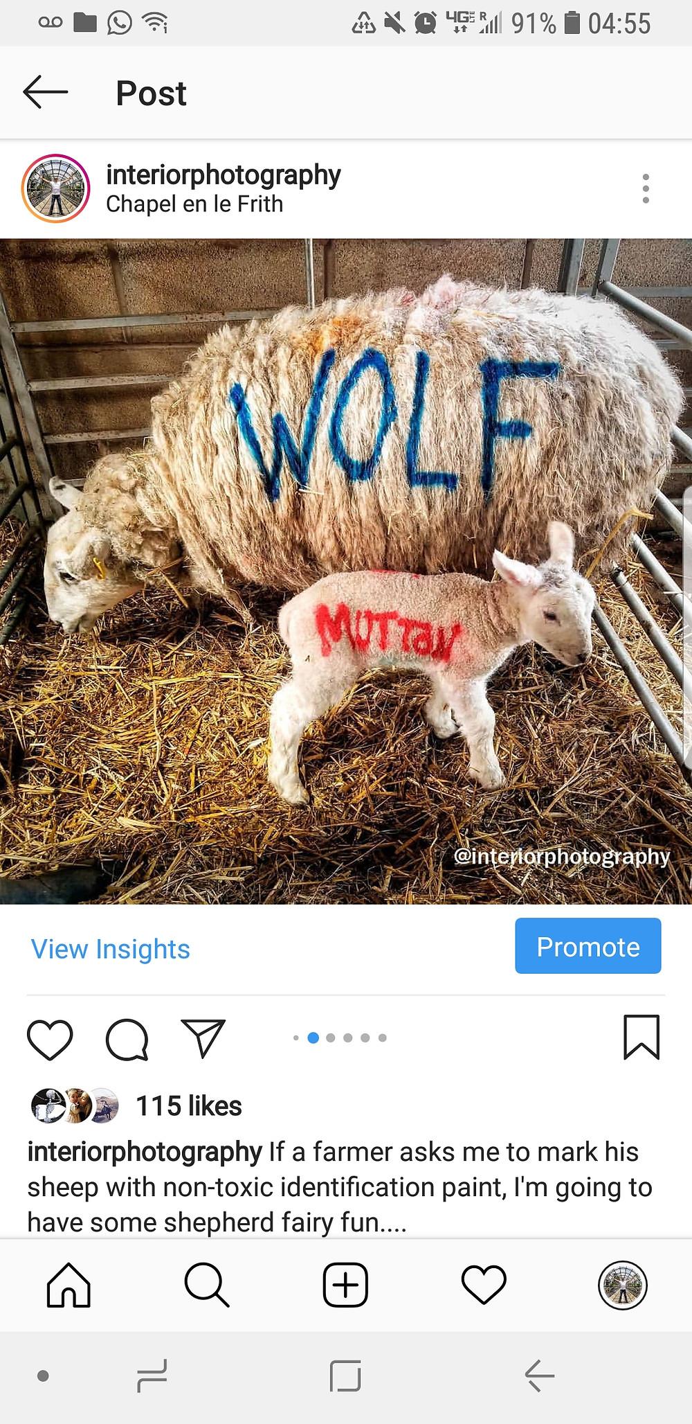 Instagram post- interiorphotography: wolf, muttan
