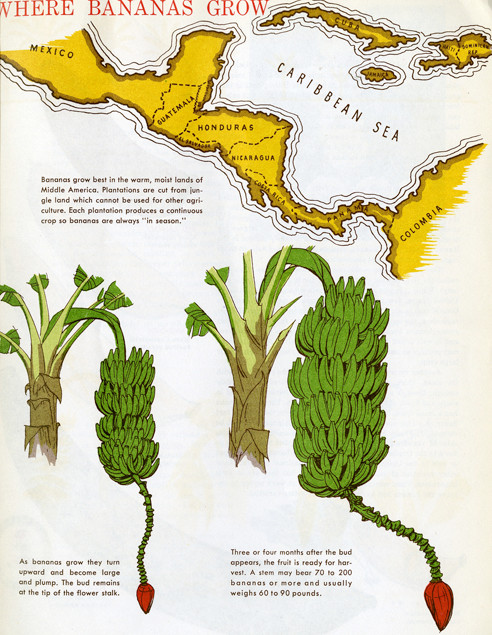 Where bananas grow
