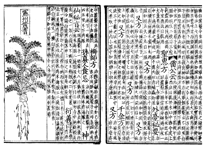 Spread from book on Chinese medicine, 1249