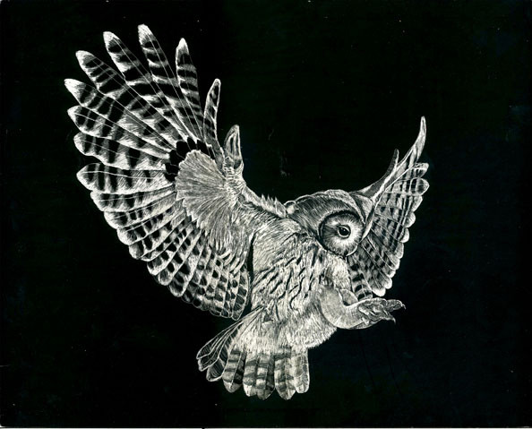 Tawny owl by Greta Romelfanger