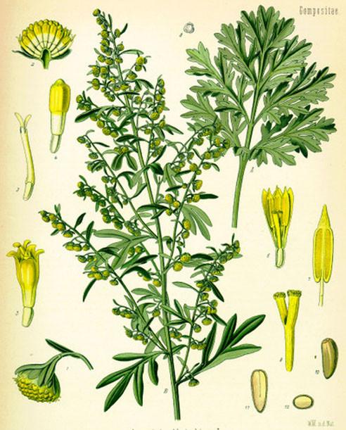 Botanical Absinthe Poster