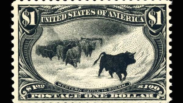 western-cattle