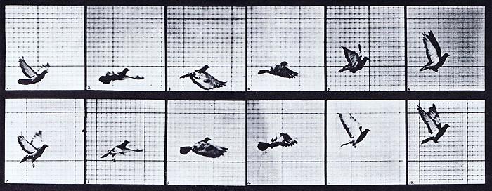 "Eadweard Muybridge's ""Pigeon In Flight"" image (circa 1887) used in Lutz's ""Animated Cartoons""."